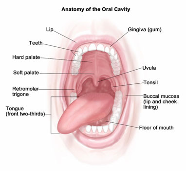 Oral Systemic Health Overview